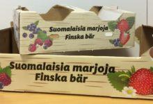 Suomalaisia marjoja, marjalaatikko